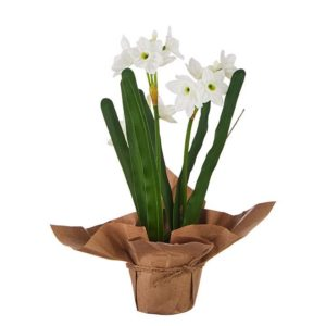 FAUX POTTED PAPERWHITES
